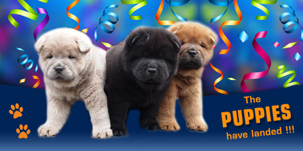 Royal Club Kennel, the Netherlands - welcome!
