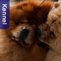 Kimekai Kennel, South Africa - in the Showcase
