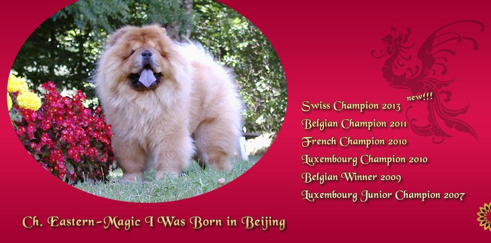 Eastern Magic's I Was Born in Beijing - in Belgium