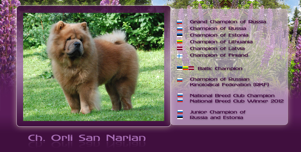 Ch. Orli San Narian - in the Showcase