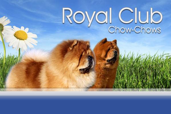 Royal Club Chow-Chows