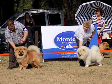 South africa chow chow shownews for Rcc home show