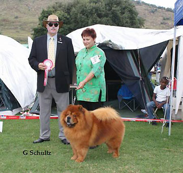 South Africa, Transvaal Midlands Kennel Club