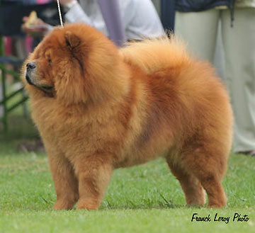 South Africa, Eastern Districts Kennel Club
