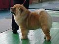 SHu-Shaolin Ursa Major