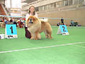 LAV LAP TOP MARAKESH