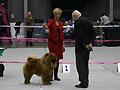 El Custo de Los Perros de Bigo