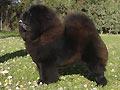 Black Jack de los Perros de Bigo