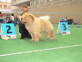 BON TRIUMPH MOON SHADOW MOCCO CREAM