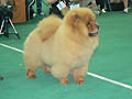 BON TRIUMPH YOU TOO