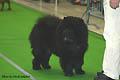 Zolotoi Medved Balu