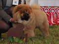 CHAITAN LEGENDB CHOW GODZILLA RED DEER