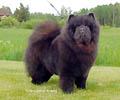 Fuzzy Bear's Day By Day Zelma