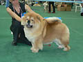 LAV LAP TOP MIJA