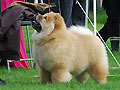 Skychows Adorable Solitaire