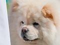 Kungfu Baby Jags of Lionbear