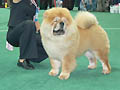 LAV LAP TOP MI DU