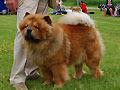 Ming-Bear Midsummer Golden Boy
