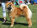 Bidachows Gentle Smooth Grizzly