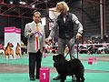 Baila de los perros de Bigo