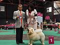 White Noel de los perros de Bigo