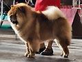 King Of Egypt de los perros de Bigo