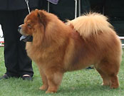 South Africa, Witwatersrand Kennel Club